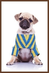 doggie clothing course
