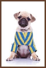 learn to sew doggie clothing